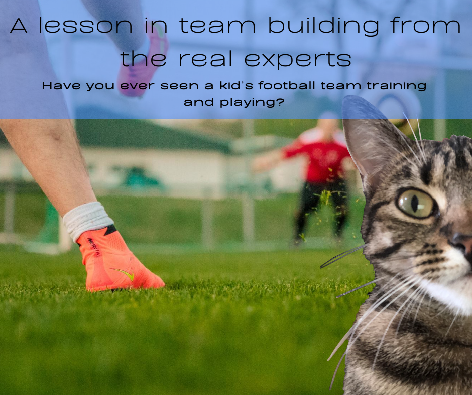 A lesson in team building from the real experts - Mike The Biz Guy